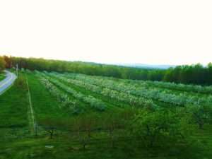 Housefield Orchard