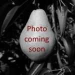 Coming Soon fruit photo